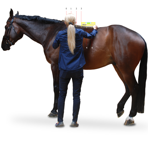 Pomiary konia